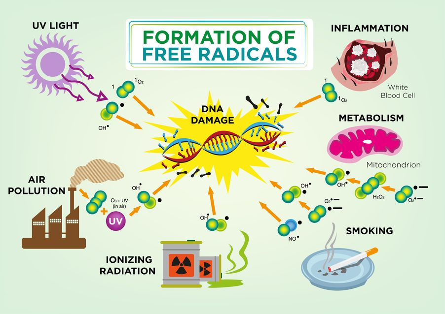 Infographics on Free Radicals damaging DNA