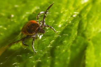 Lyme Disease Infection