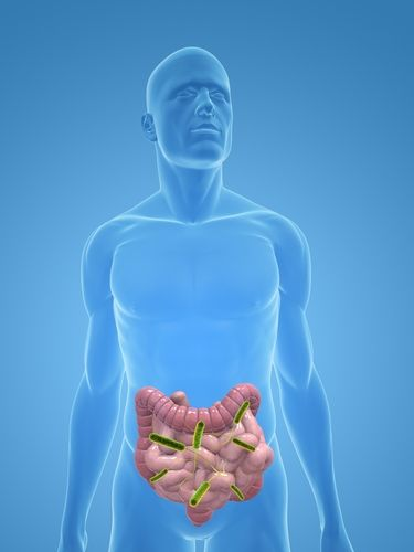 Small Intestines Infection