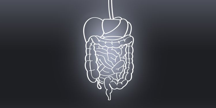 Illustration of human gut