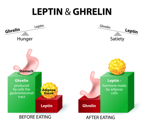 Illustration of Leptin and Ghrelin hormones