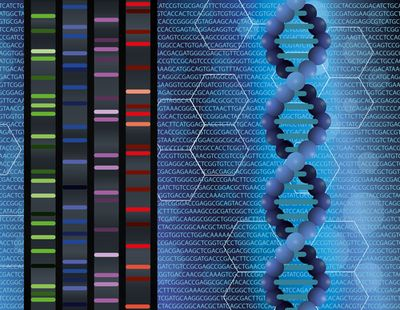 Sanger Sequencing