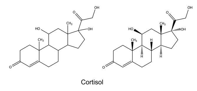 Structural Chemical Formula of Cortisol