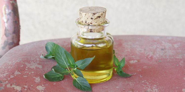 Photo of small bottle of homemade peppermint oil with herb leaves