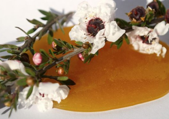 Manuka Honey with Blooming Branch