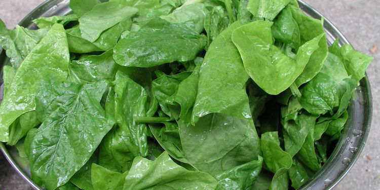 Photo of spinach leaves in a bowl