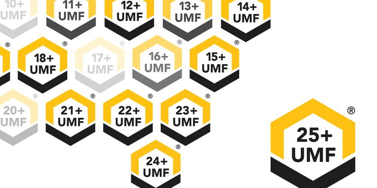 Illustration of UMF logo put inside hexagonal bee hive scheme