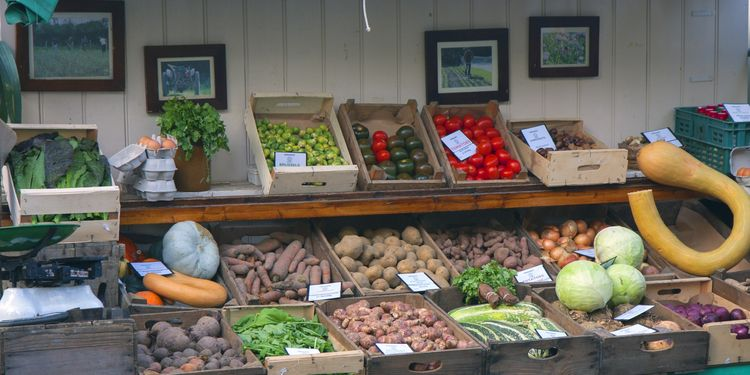 Photo of different vegetables in boxes on market place