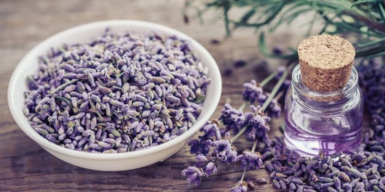 Image of LAVENDER OIL, food that makes you more desirable