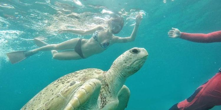 Image of the girl swimming with a turtle