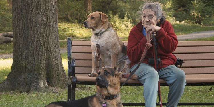 Photo of old lady sitting on a bench outside with her two dogs