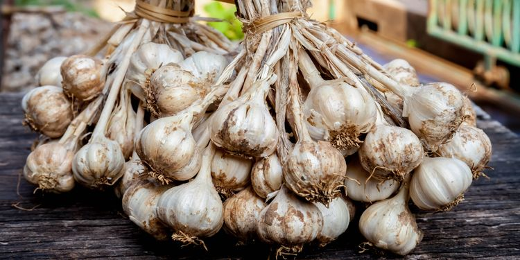 Photo of garlic stack in market