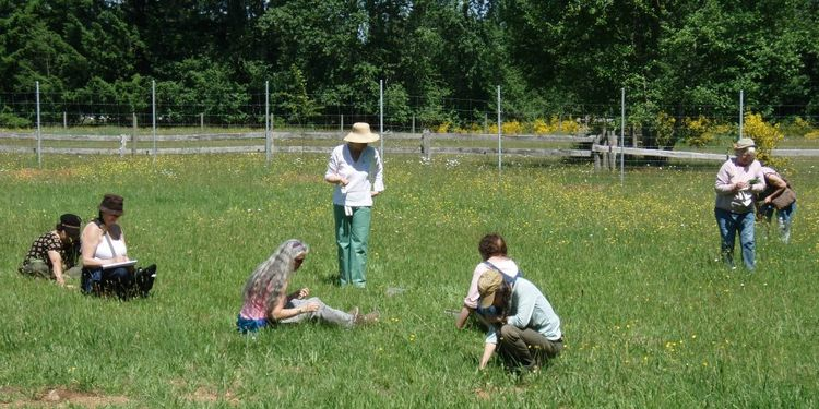 Photo of people collecting herbs on Innisfree farm meadows