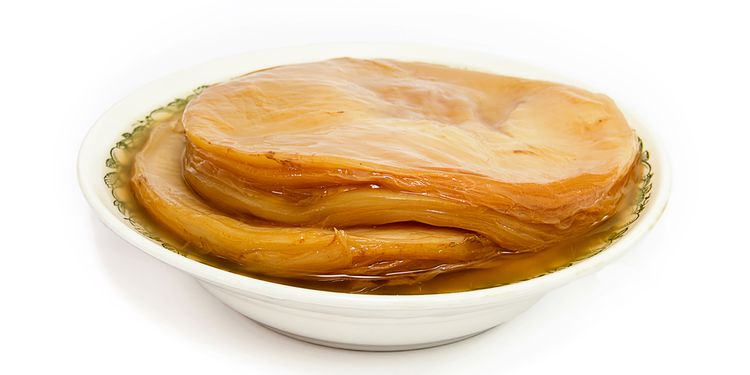 Photo of kombucha SCOBY on a plate