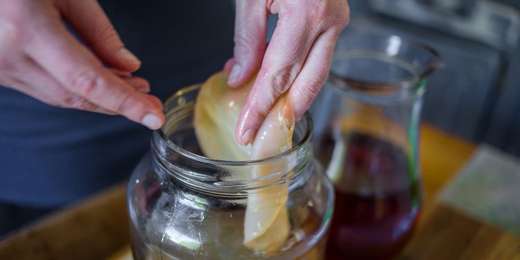 Photo of hands pulling out the SCOBY kombucha out of the jar