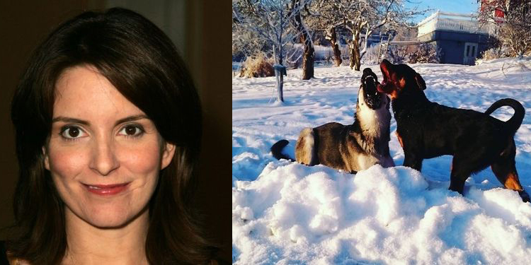 Image of Tina Fey who suffers from allergy