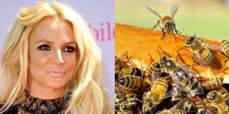 Image of Britney Spears who suffers from allergy