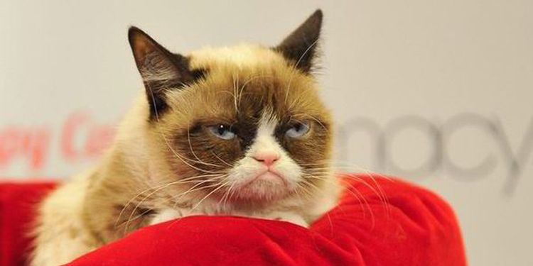 Photo of a grumpy cat lying on bed