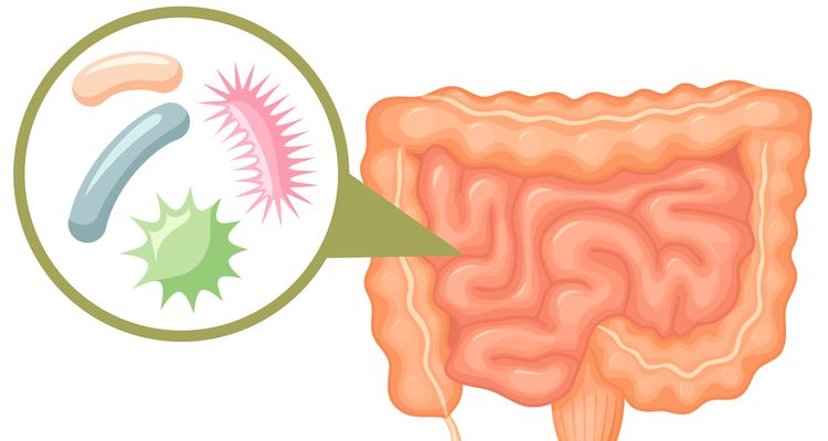 The Microbiome Explained in Plain English