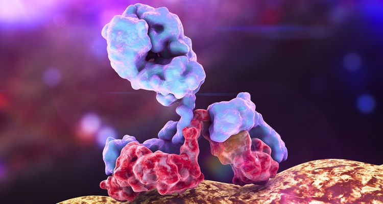 Photo of antibody attacking bacteria, 3D illustration in color