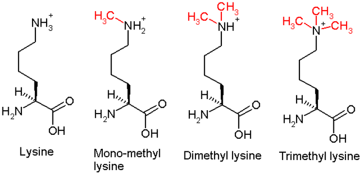 Scheme of chemical reaction of Lysine methilation