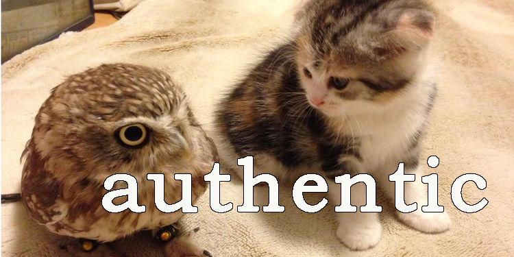Image of an owl and a kitten