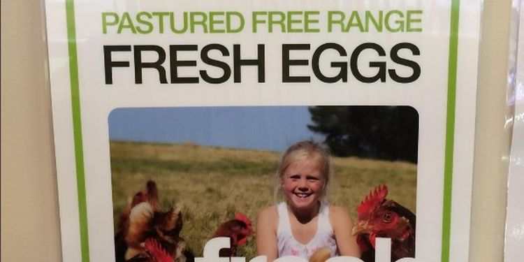 Image of free range eggs
