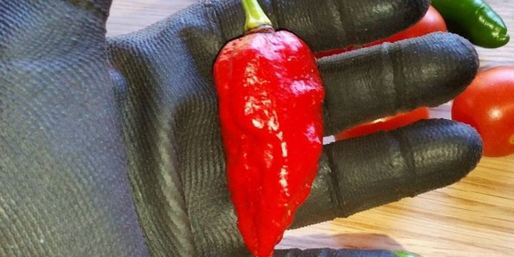 Image of a vewry hot pepper