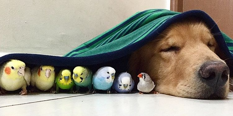 Image of a dog and birds under the towel