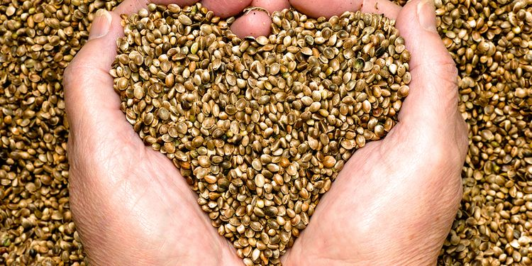 Photo of camelina sativa seed