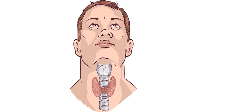 Illustration of thyroid gland in a human body