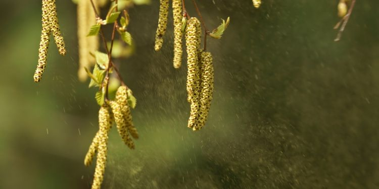 Photo of herbal pollen in air