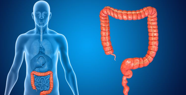 Illustration of human intestines, IBS