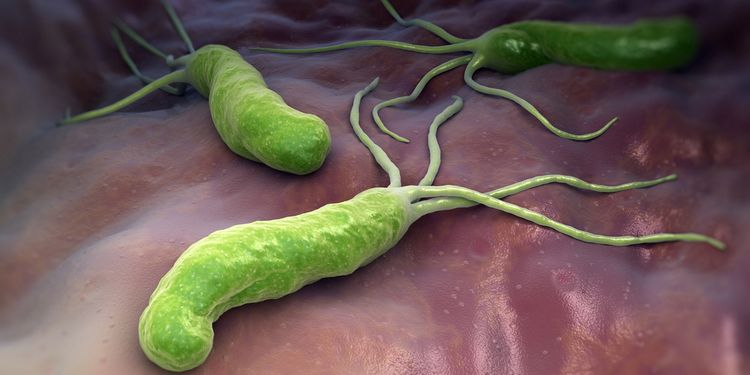 Illustration of a Helicobacter Pylori
