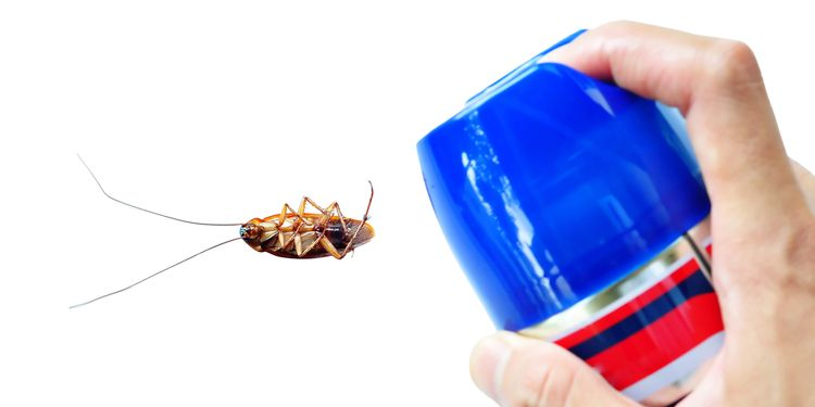 Photo of a person using pest control Spray on a cockroach
