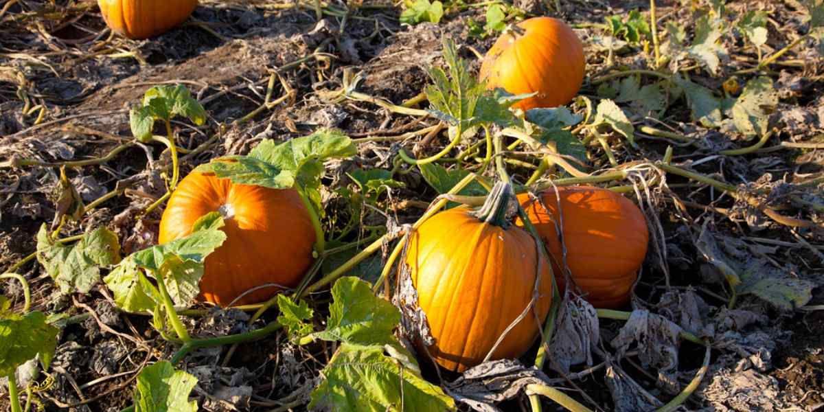 These Fun, Family-Oriented Fall Activities Will Keep Everyone Happy