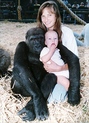 Man Introduces His Wife To Gorillas He Raised And Things Didn't Go As Planned